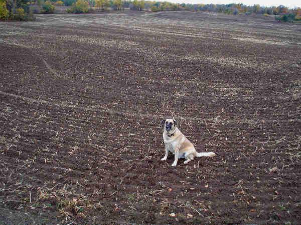 [Image: farmfield.jpg]